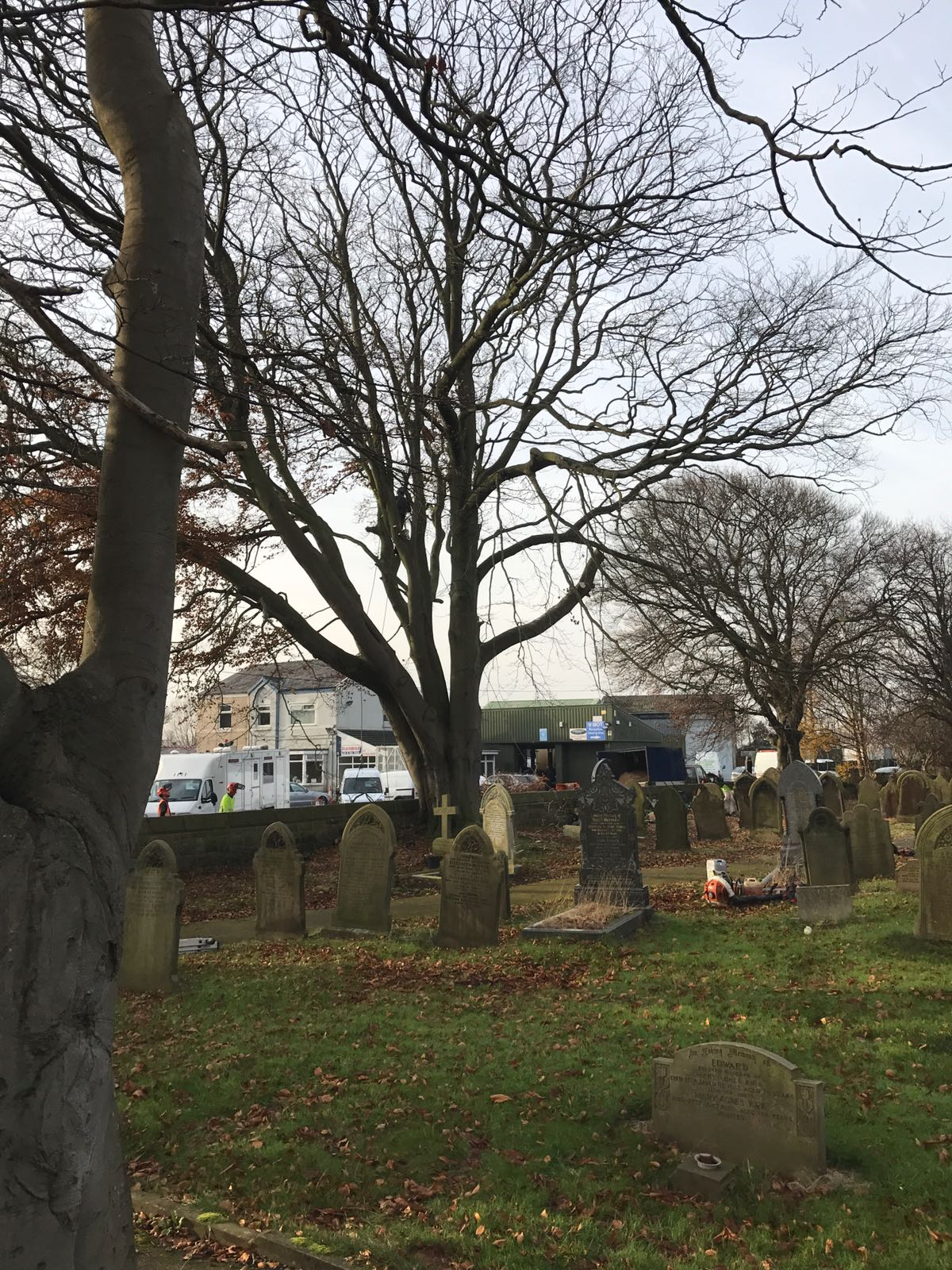 EA Formby Ltd | St Marks Church yard, Scarisbrick, Lancashire | Infected Beech Trees