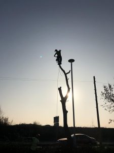 Poplar removal - Asda Leigh - EA Formby NW - Tree Removal Lancashire